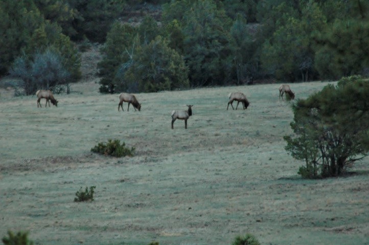 RV Motorhome Boondocking National Forest Shot Herd Elk