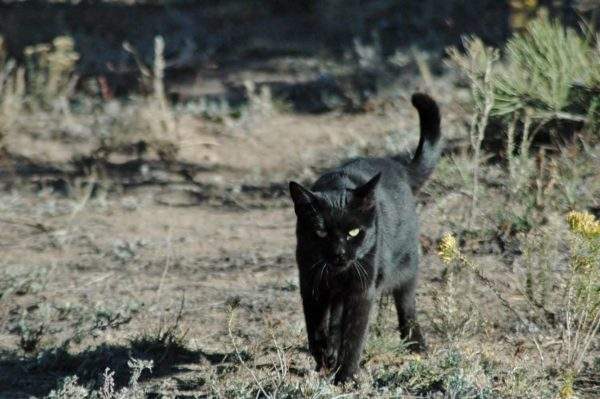 Buddy cat hunting forest