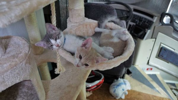 Woody Buzz Kitten Cat Tower of Terror