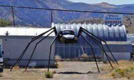 Coolest Bug EVER!